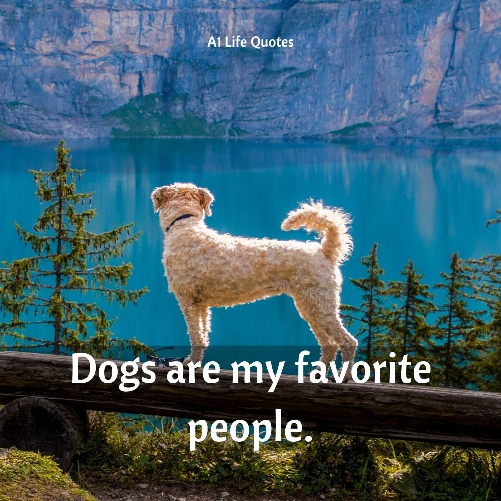 dog with girl quotes