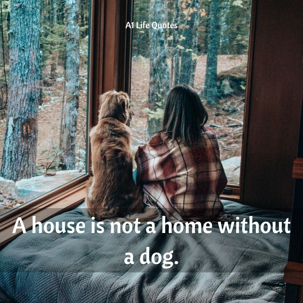 dog and girl quotes