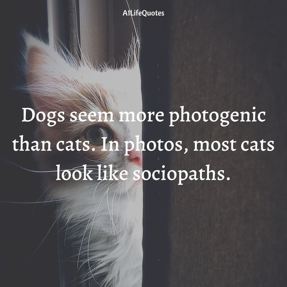 cat and dog together quotes
