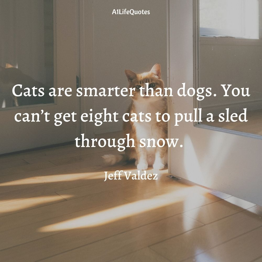 cats are smarter than dogs quotes