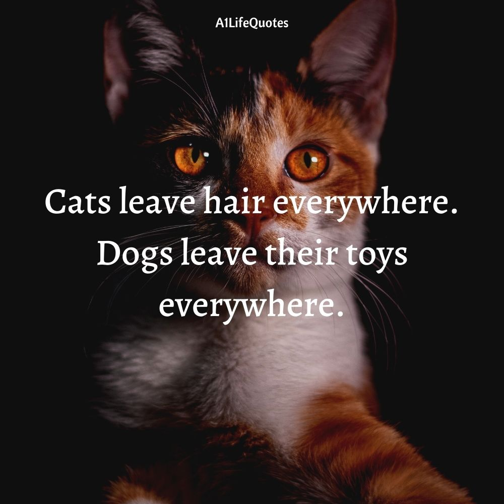 cat and dog quotes funny