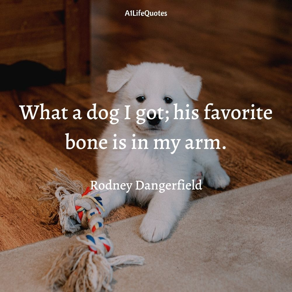 dog and baby love quotes