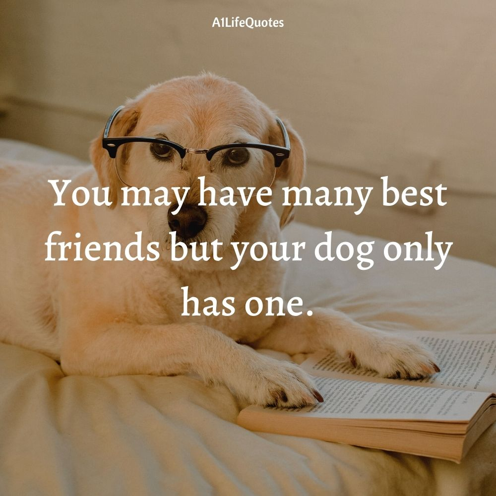 fur baby mom quotes