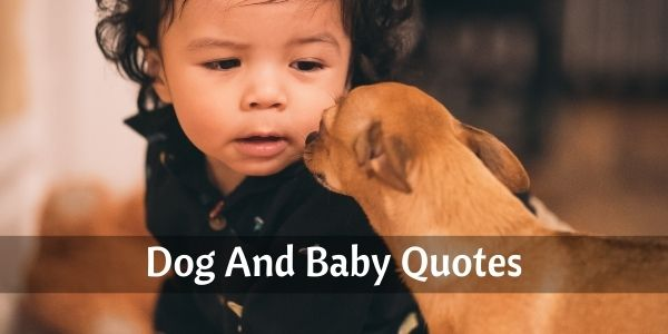 dog and baby quotes