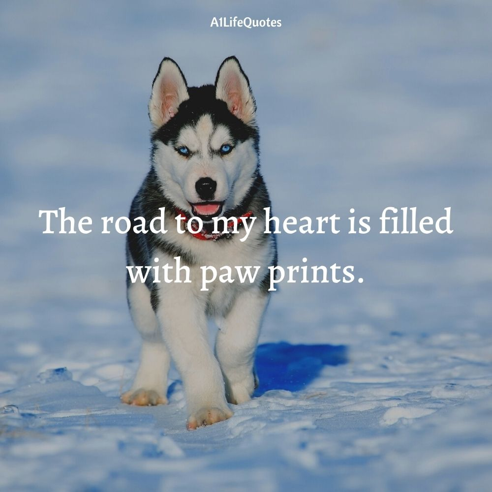 husky quotes instagrams