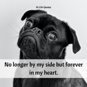 dog passing quotes