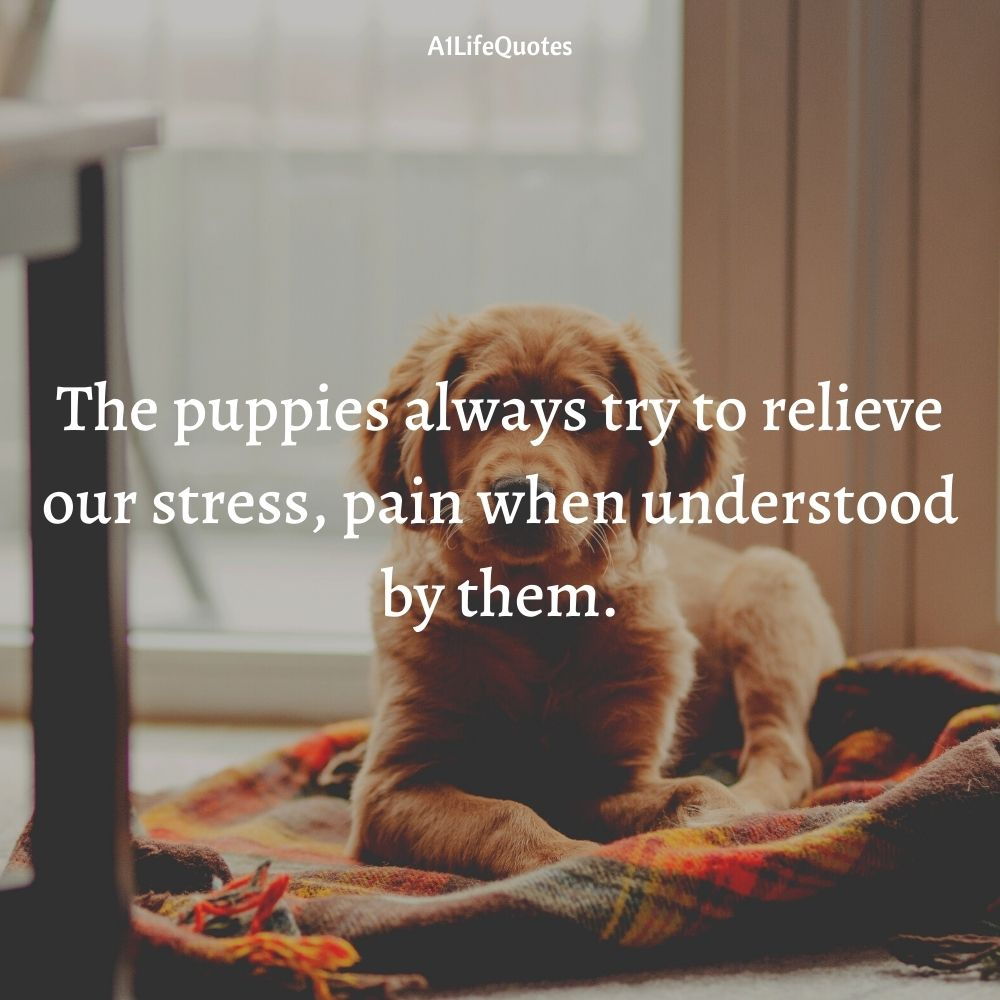 national puppy day quotes