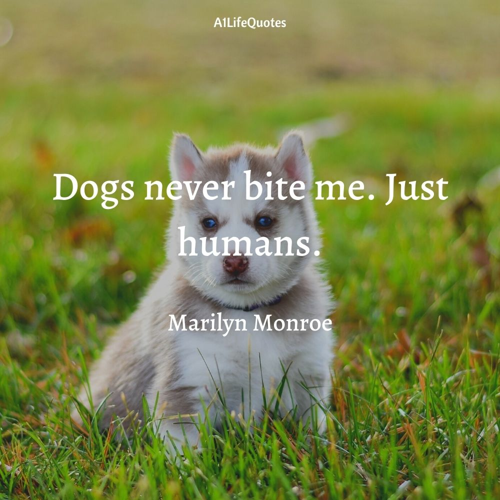 puppy quotes funny