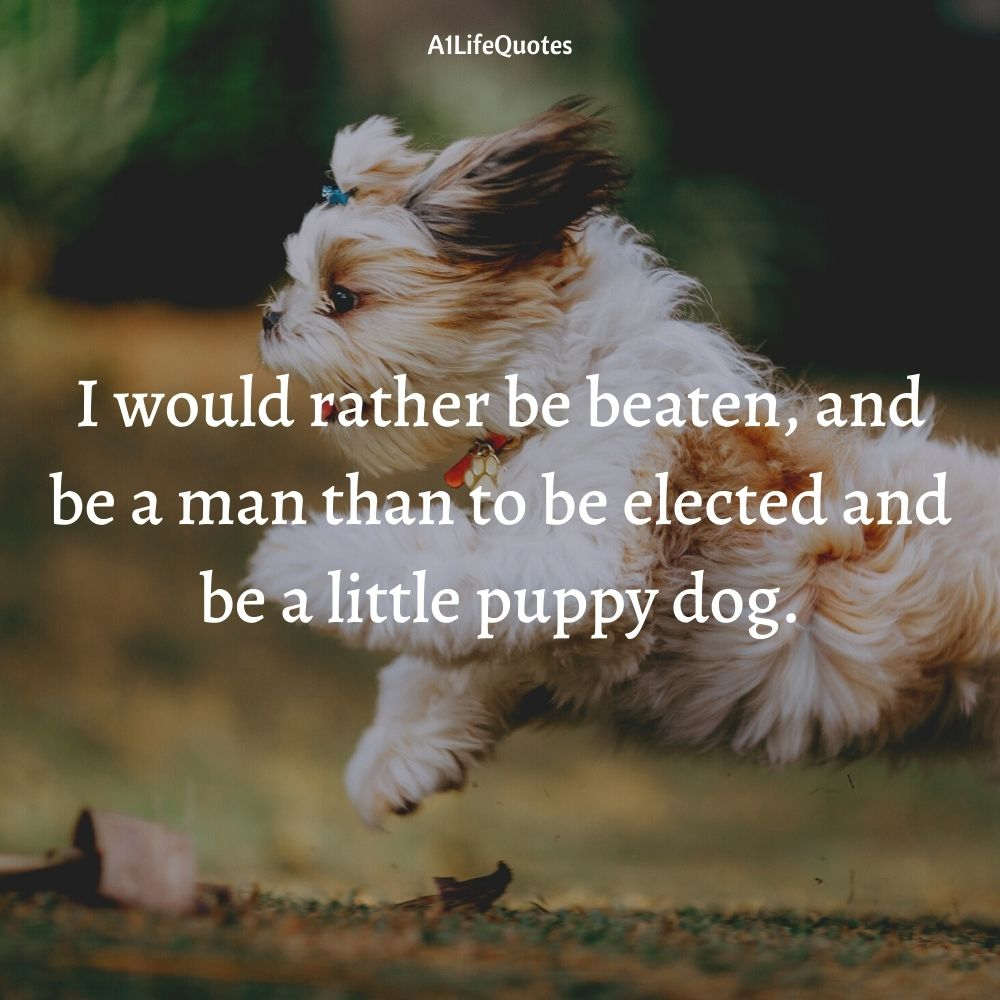 dog puppy quotes