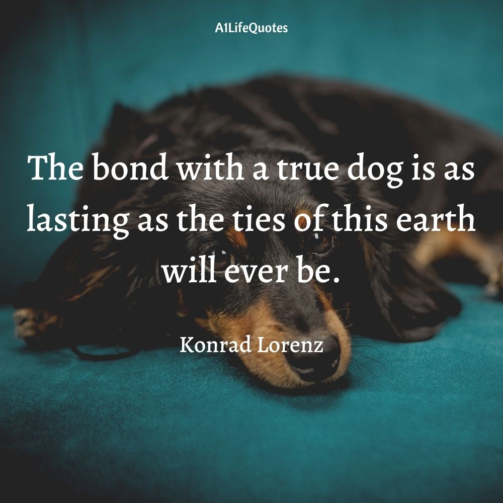 funny rescue dog quotes