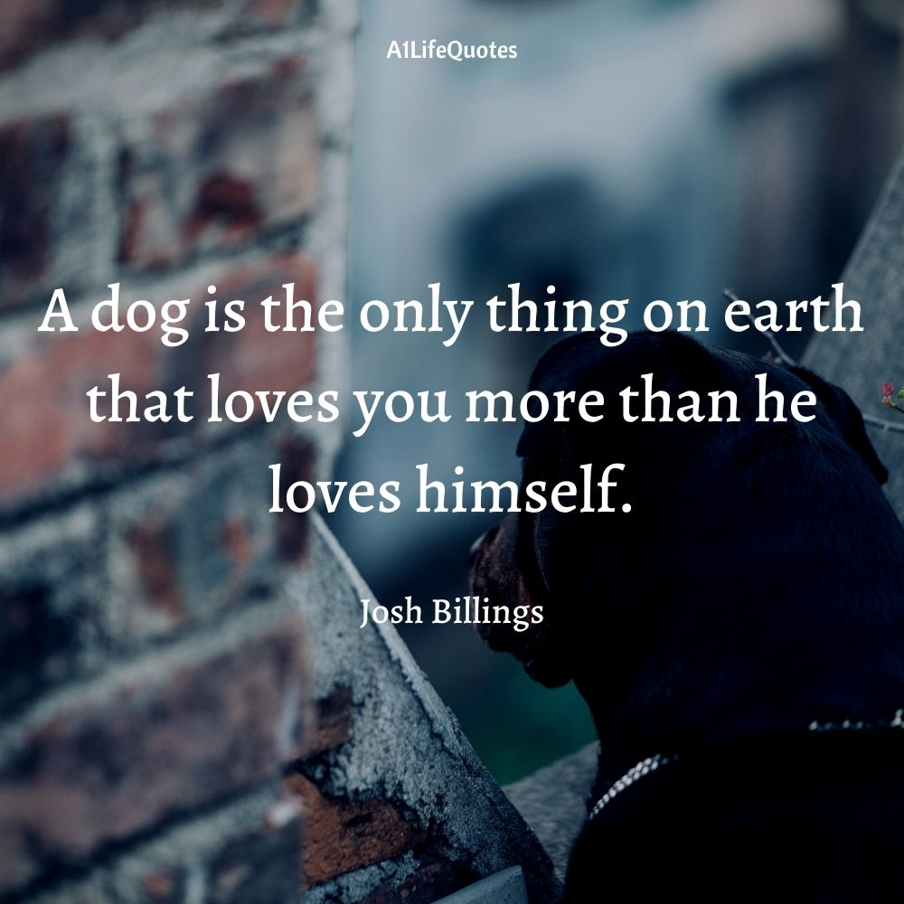 rottweiler love quotes