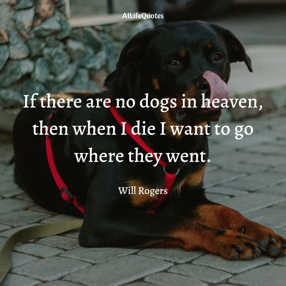 rottweiler funny quotes