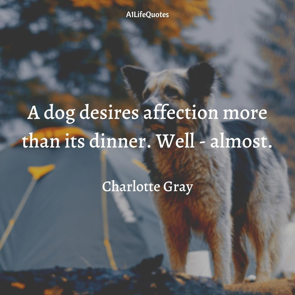 funny dog quotes about humans