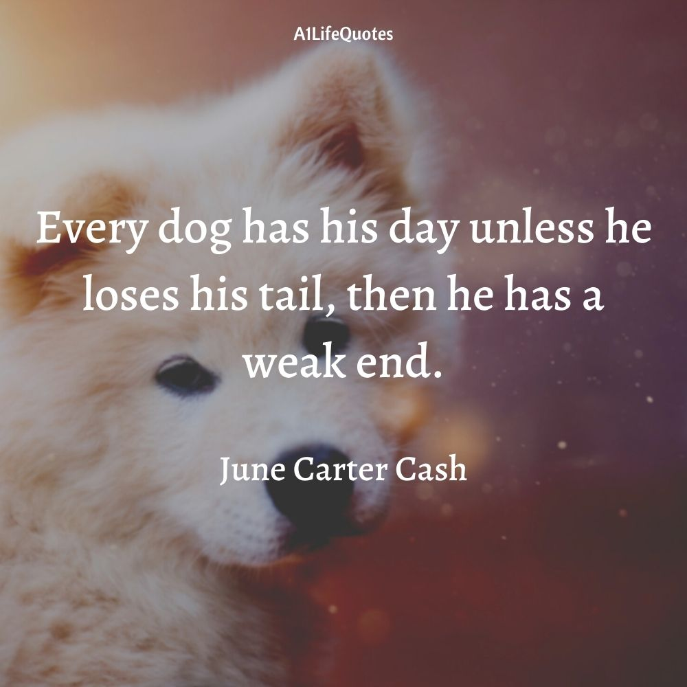 dogs over humans quotes