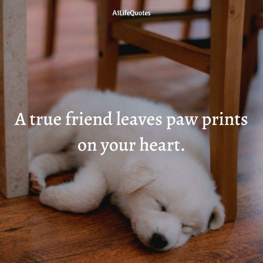 dog and human friendship quotes