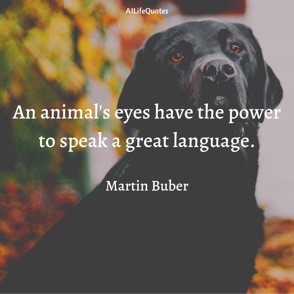 dogs are better than humans quotes