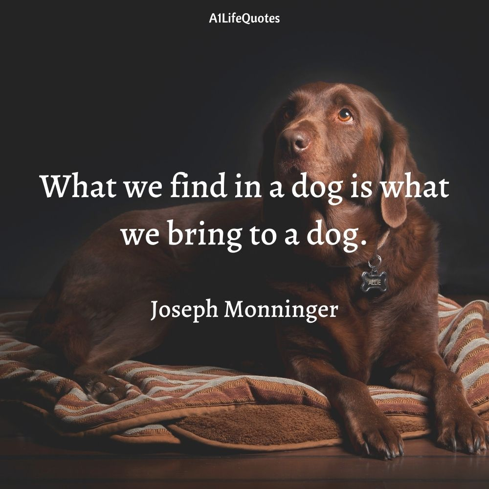 dog and human relationship quotes
