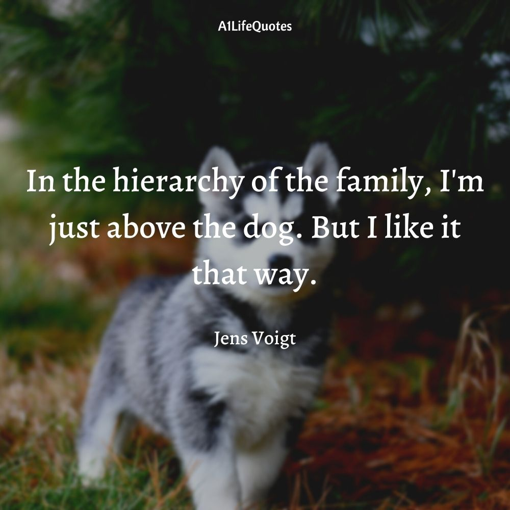 new family member dog quotes
