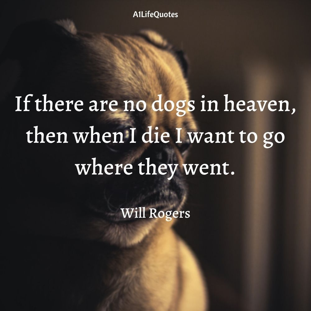 funny pug quotes