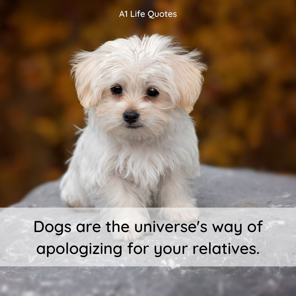 funny puppy captions