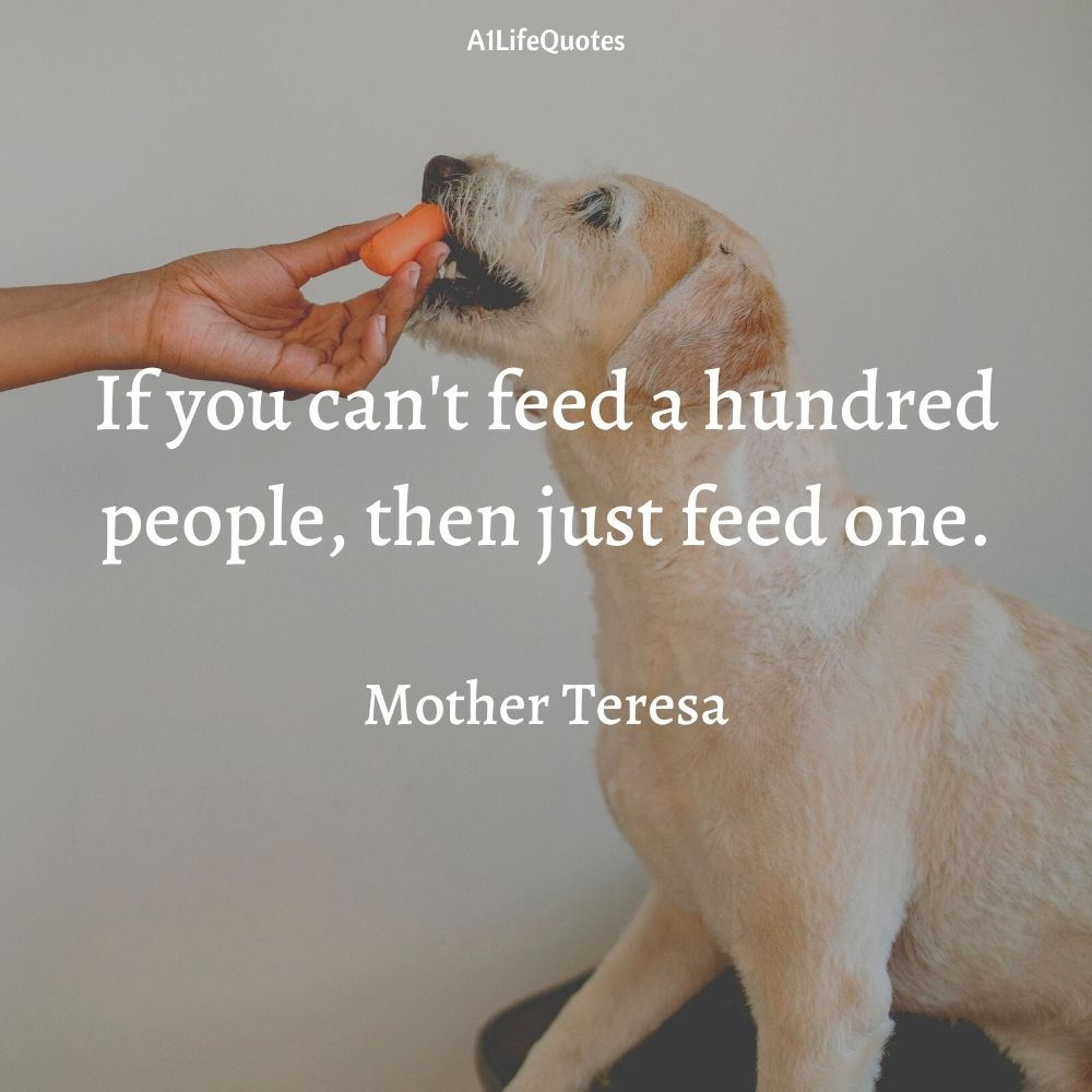 feed stray dogs quotes